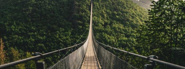 pont en bois brun sur les arbres verts